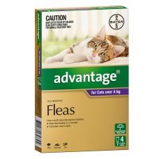 Advantage Cat 4kg+ 6pk