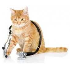 Cat Health & Wellbeing