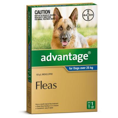 Advantage for Dogs 25kg+ 6pk