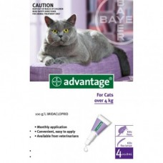 Advantage Cat 4kg+ 6pk