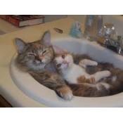 Cat Grooming & Shampoo