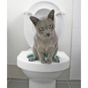 Litter, Trays & Accessories