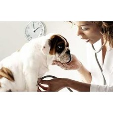 Dog Flea & Worming