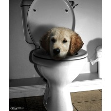 Toilet Training & Cleanup